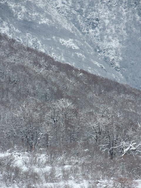 Bosques en Chillán