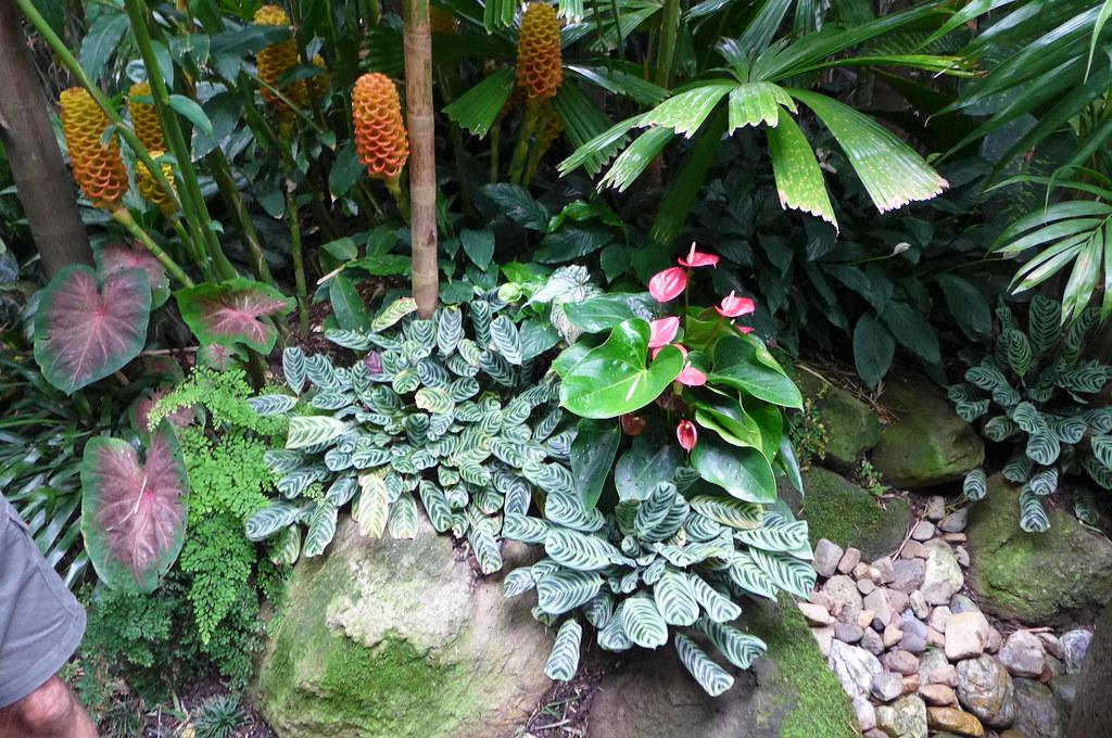 incredible tropical garden brisbane | P1060873 | Dennis Hundscheidt's tropical-Asian themed ...