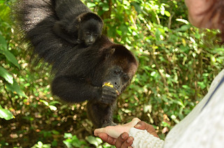 Community Baboon Sanctuary -Joe-3 | by KathyCat102