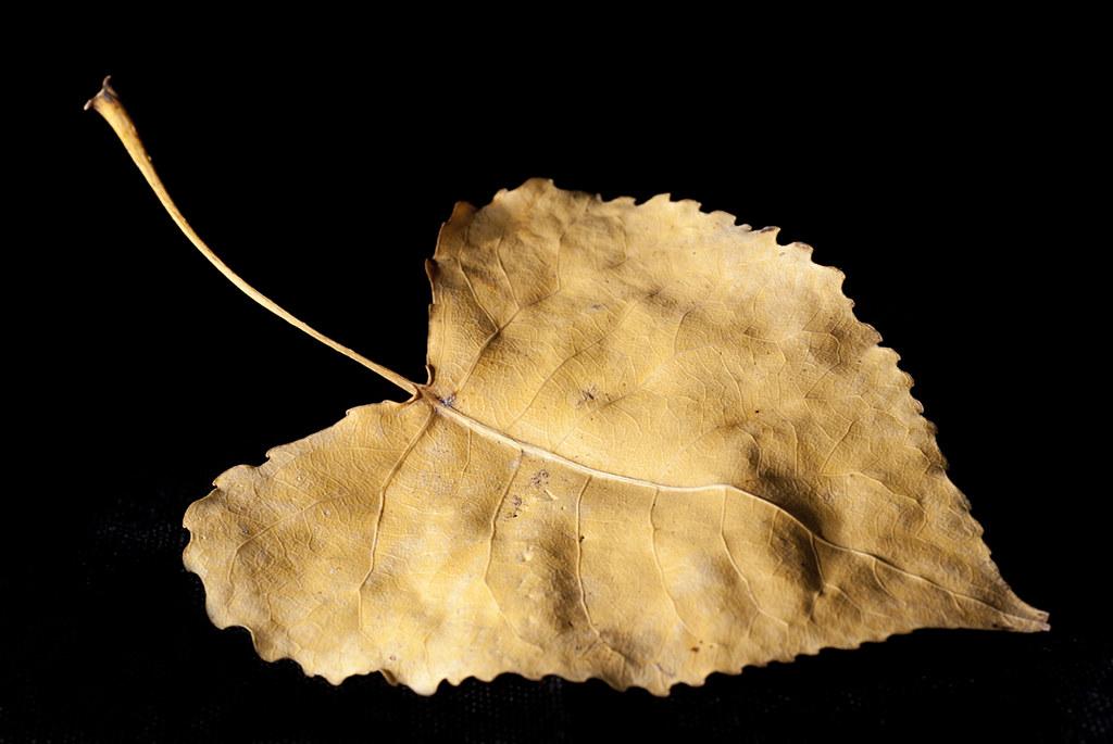 Corazón (triste) de otoño