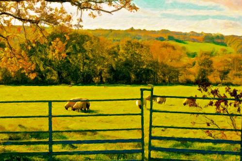 england painterly art rural painting photography landscapes artwork mac gate sheep digitalart farmland lancashire textured snapart applecrypt