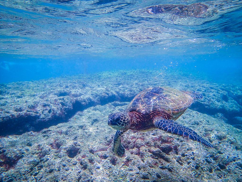 Kauai'I Hawaii