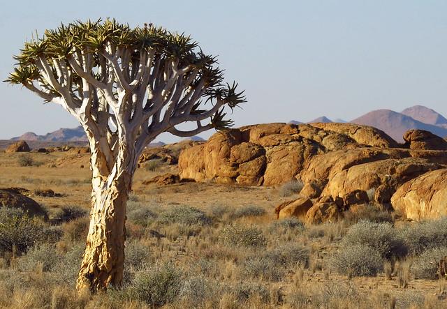 Namibia - Naukluft - Namib Desert