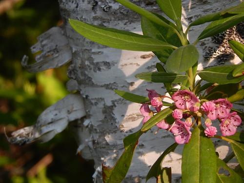 Thomas Raddall Provincial Park - bloem