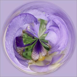 How About an Iris as an Orb?