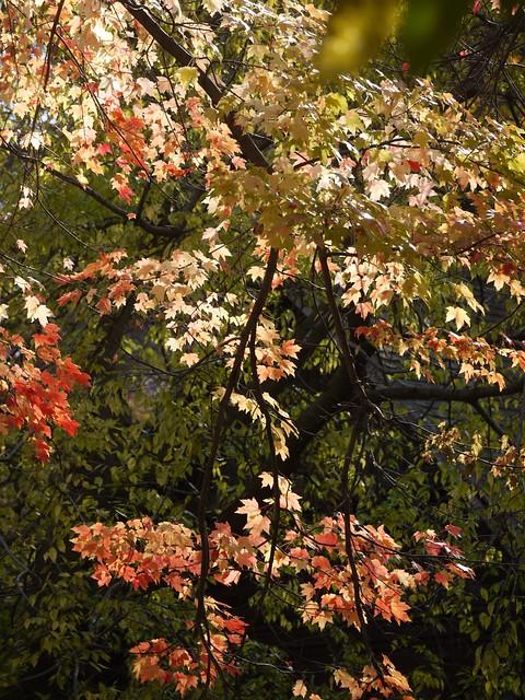 日, 2013-11-10 12:03 - Central Park