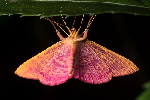 Colorful Moth | by antonsrkn