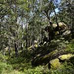 06 Viajefilos en Australia. Cathedral Rock NP 35