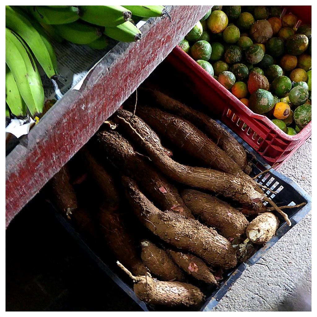 Des grosses légumes de Costa Rica. Le manioc est utilisé comme légume énergétique, sans gluten, qui remplace parfaitement les féculants. Il se cuisine comme la pomme de terre : purée, frites, manioc sauté...