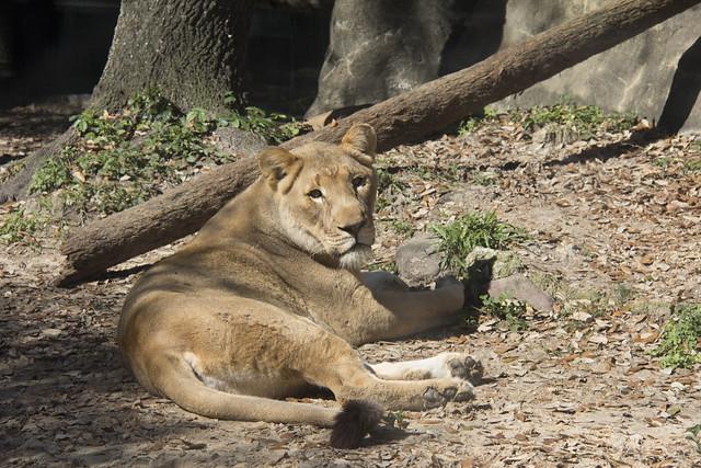 Houston Zoo_69