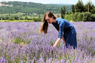 Millay in lavender_1542 | by FeistyTortilla