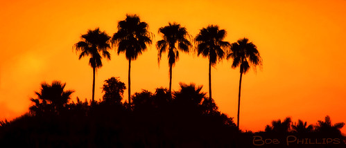 sunrise florida palmtrees pineisland bokeelia