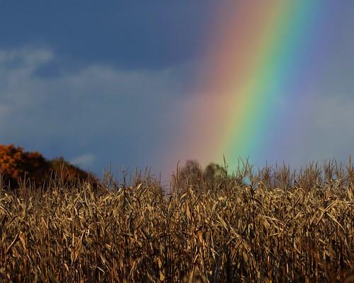 fall rainbow fallcolor sonynex5n leicaleitztelyt200mmf4520cm
