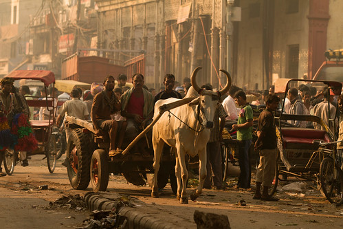 street morning people india animals horizontal sunrise workers bullock indian streetphotography scene bulls photograph transportation cart newdelhi porters bluecollar editorialoutdoors