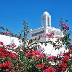 Bougainvillea flowers and white mosque, Djerba, Tunisia チュニジア、ジェルバ島 ブーゲンビリアと白いモスク