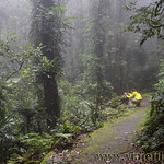 07 Viajefilos en Australia. Dorrigo Rainforest NP 37