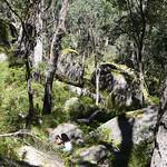 06 Viajefilos en Australia. Cathedral Rock NP 36