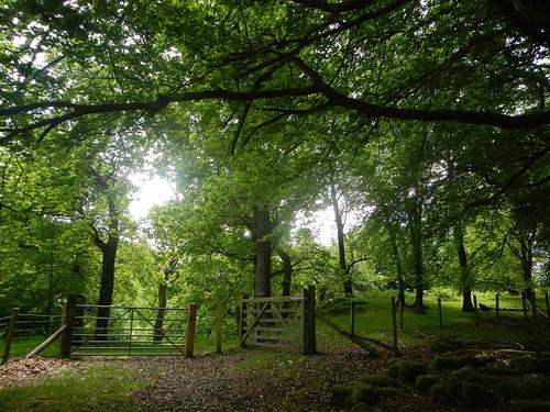 A path through the trees on the Precipice Walk in Dongellau, Wales