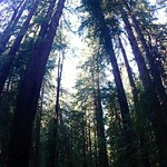 Image: More really tall trees
