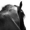 horse_A.P (8)