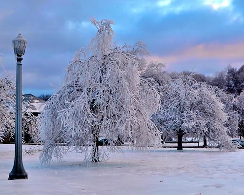 winter sunset snow ontario canada cold tree niagarafalls day miguelyn elitegalleryaoi