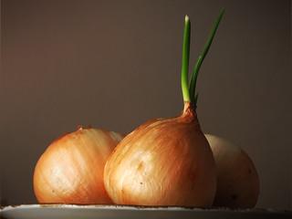 3 cebollas | by daisti-diseños