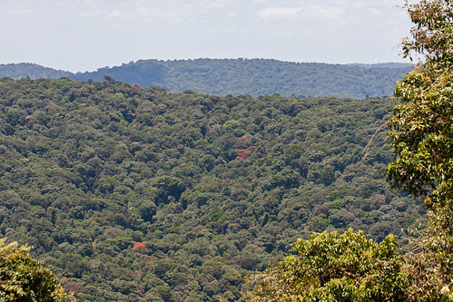 heritage nature ecology landscape rainforest australia nsw aus unescoworldheritage worldheritage borderrangesnationalpark canon40d borderrangesnp canonef100mmf28macroisusm
