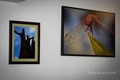 """Exposición Colectiva """"Madre Tierra"""""""