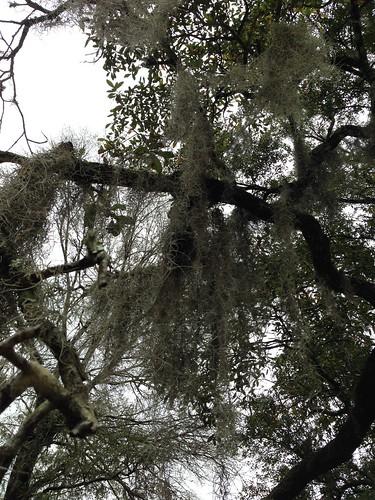 Angel Oak | by wandernwoman