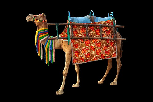 india odisha puri camel asienmanphotography asienmanphotoart