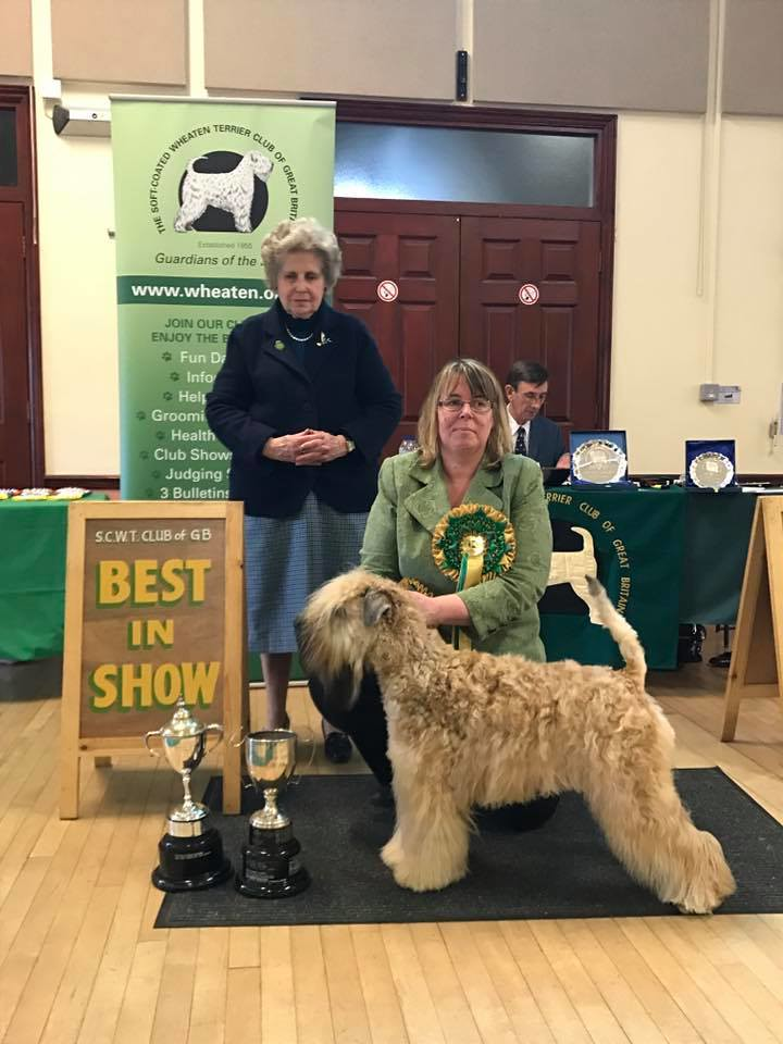 Bis Soft Coated Wheaten Terrier Club Of Gb Flickr