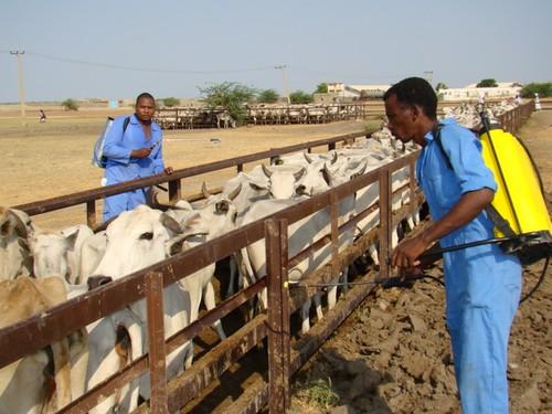 Sudan | by linpicosarl