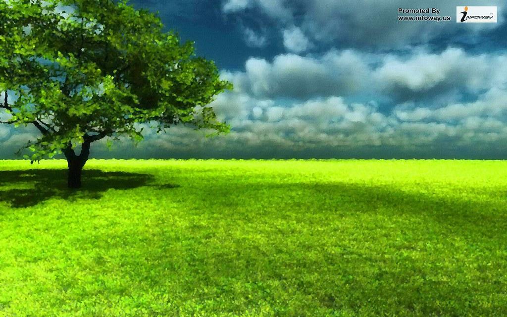 Widescreen High Definition Green Grass Landscape Free Desk