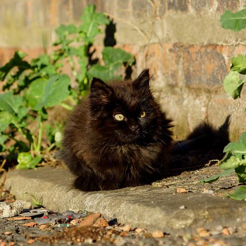 Feral kitten | by Bev Goodwin