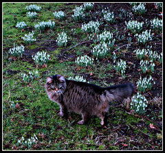 Malachy of the Mansions in his Snowdrop Domain