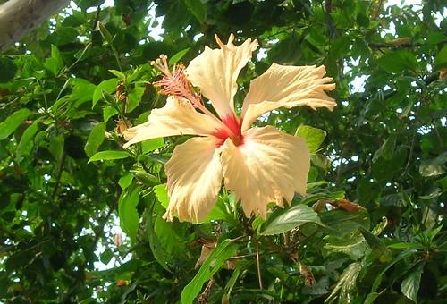 village bengal chinarose pramanick dahuka
