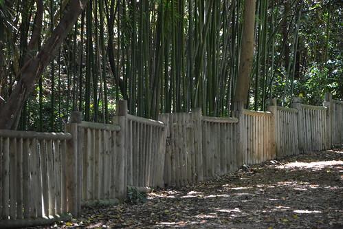 (13) Le Parc du Mugel et son jardin exotique - La Ciotat - Page 2 33147609535_1b9ae0940a
