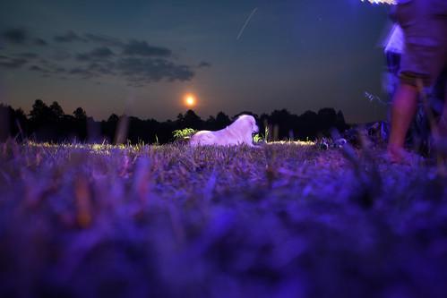 Pink Dog | by Kontramax