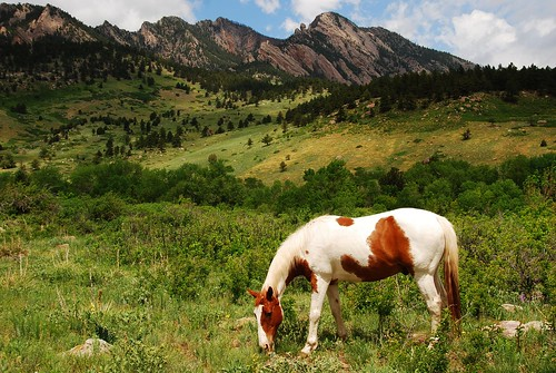eldorado el dorado springs boulder colorado horse grazing graze mountains foothills pasture pinto pintohorse eldoradosprings landscape horsewithmountainsinthebackground