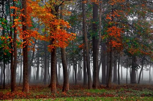 autumn mist ontario canada fall fog forest mood can foliage 2013 burlingtonwest bestcapturesaoi elitegalleryaoi mygearandme mygearandmepremium flickrstruereflection1 collingrd