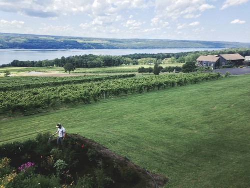 lake newyork winery fingerlakes vinyard senecalake grapehounds