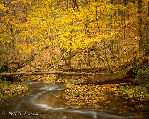 wood longexposure morning november autumn trees tree fall nature water leaves creek sunrise canon landscape outdoors morninglight pond stream day cloudy hiking fallcolors overcast 7d cloudysky canon7d canon1585mmlens duckettcreek