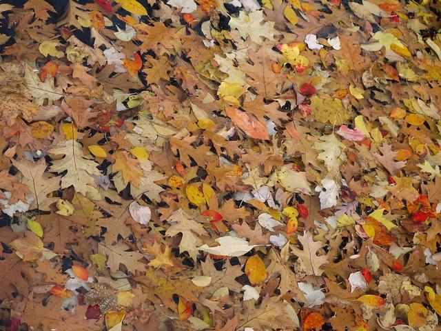日, 2013-11-03 12:21 - Bronx Botanical Gardenの紅葉