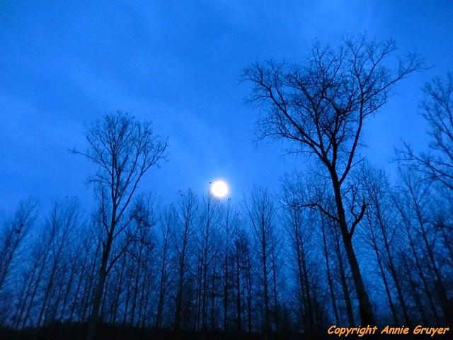 Blue night shadow
