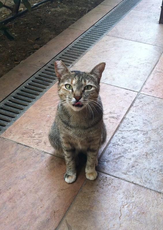 Saija ruokki salaa kissaa. Tykkäsi kalasta.