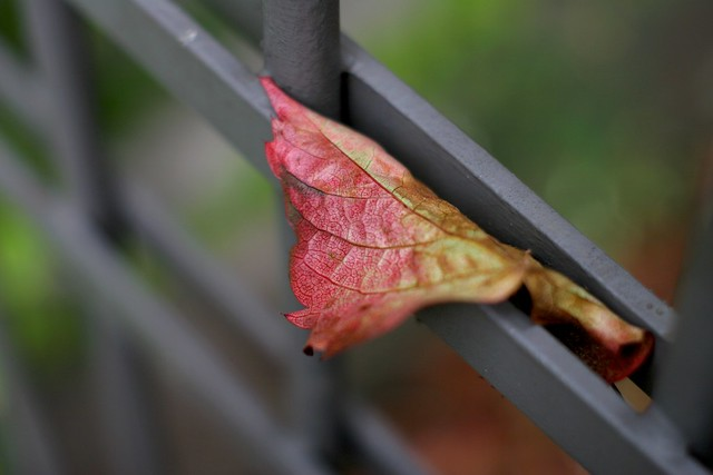 Autumn and Metal