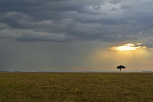 sunset naturaleza nature landscape atardecer kenya paisaje kenia masaimara abigfave