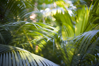 Lush Palm Forest