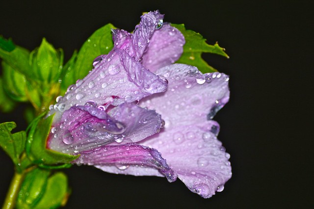 lovely wet flower