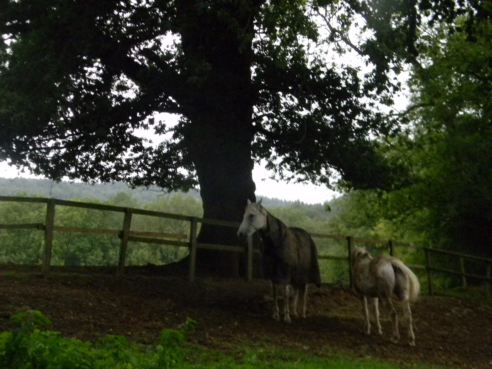 horses Holmwood to Gomshall Like cows but people sit on them.